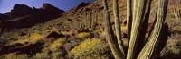 Desert Landscape, Organ Pipe Cactus National Monument, Arizona, USA Fine Art Print