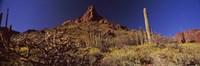 Organ Pipe Cactus National Monument, Arizona Fine Art Print