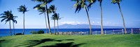 Palm trees at the coast, Ritz Carlton Hotel, Kapalua, Molokai, Maui, Hawaii, USA Fine Art Print