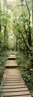 Stepped path surronded by Bamboo shoots, Oheo Gulch, Seven Sacred Pools, Hana, Maui, Hawaii, USA Fine Art Print