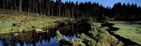River flowing through a forest, East Dart River, Dartmoor, Devon, England Fine Art Print