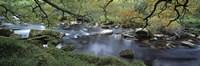 River flowing through a forest, West Dart River, Dartmeet, Devon, England Fine Art Print