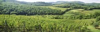 Vineyards in Chianti Region, Tuscany, Italy Fine Art Print