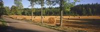 Hay bales in a field, Flens, Sweden Fine Art Print