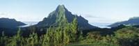Mountains at a coast, Belvedere Point, Mont Mouaroa, Opunohu Bay, Moorea, Tahiti, French Polynesia Fine Art Print