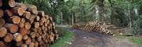 Stacks of logs in forest, Burrator Reservoir, Dartmoor, Devon, England Fine Art Print