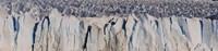 Moreno Glacier, Argentine Glaciers National Park, Patagonia, Argentina Fine Art Print