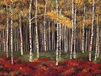Aspen Forest Framed Print