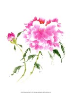 Peonies in Pink II Fine Art Print