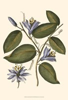 Lavender Floral III Fine Art Print