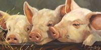 Pig Heaven Framed Print