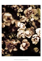 Romantic Roses I Fine Art Print