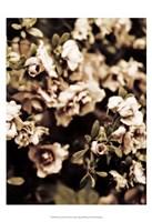 Romantic Roses II Fine Art Print