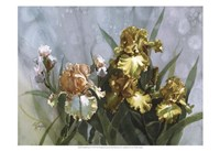 Hadfield Irises I Fine Art Print