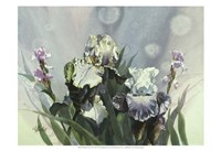 Hadfield Irises III Fine Art Print