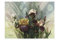 Hadfield Irises VI Fine Art Print