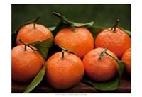 Satsuma Tangerines I Fine Art Print