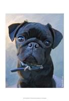 Pug Baby Blue Fine Art Print
