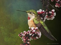 Hummer with Blossoms Fine Art Print
