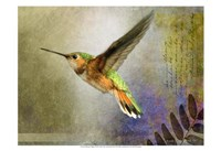 Hummer Flight Fine Art Print