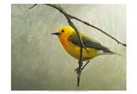 Prothonotary Warbler Framed Print