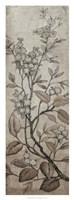 Branch & Blossoms I Framed Print