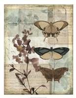 Music Box Butterflies II Framed Print