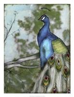 Peacock Reflections I Framed Print