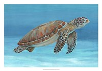 Ocean Sea Turtle I Framed Print