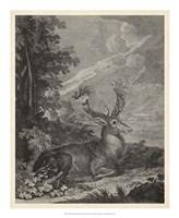 Woodland Deer III Fine Art Print