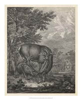 Woodland Deer IV Fine Art Print