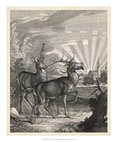 Woodland Deer V Fine Art Print