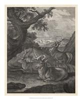 Woodland Deer VI Fine Art Print