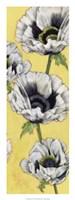 Poppy Vine II Framed Print
