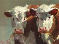 Cow Belles Fine Art Print