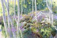 Aspen Glade Fine Art Print