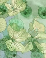 Mint Progeny III Fine Art Print