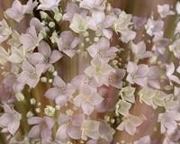 Soft Floral II Framed Print