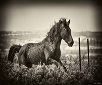 Running Horse Fine Art Print