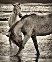 Beach Horses I Fine Art Print
