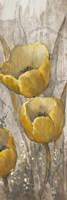 Ochre Tulips I Framed Print