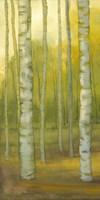Sunny Birch Grove I Fine Art Print