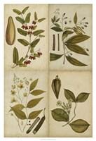 Botanical Montage I Framed Print
