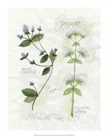 Oregano & Mint Fine Art Print