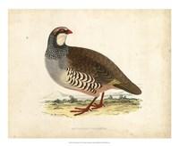 Morris Pheasants II Fine Art Print