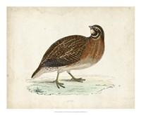 Morris Pheasants IV Fine Art Print