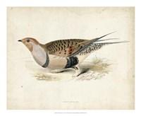Morris Pheasants V Fine Art Print