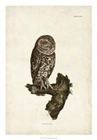 Little Owl Fine Art Print