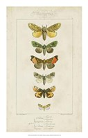 Pauquet Butterflies II Framed Print