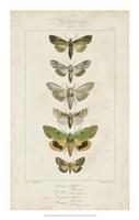 Pauquet Butterflies III Framed Print